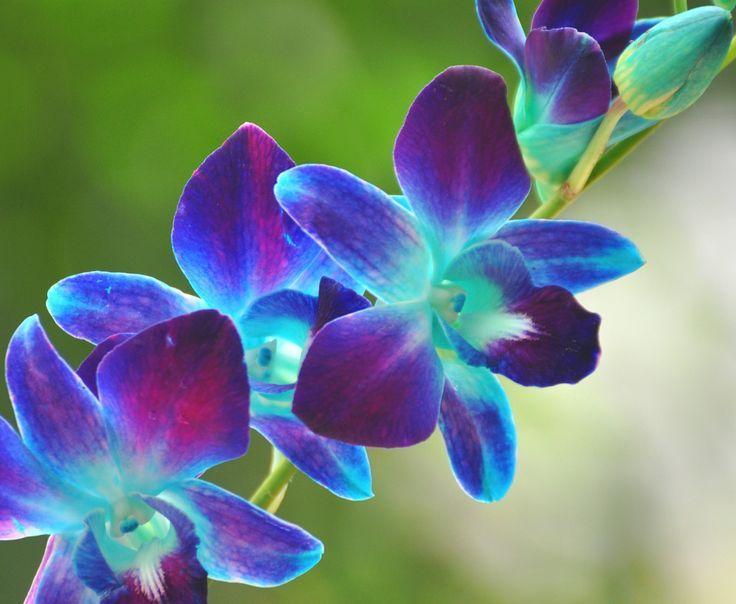 blue and purple tie photo - 1