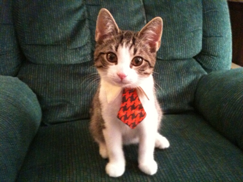 cat tie photo - 1