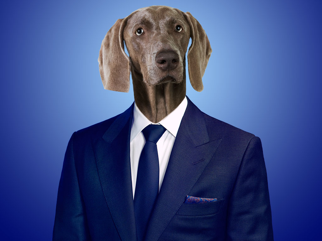 dog in business suit photo - 1