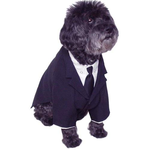 dog suit and tie photo - 1