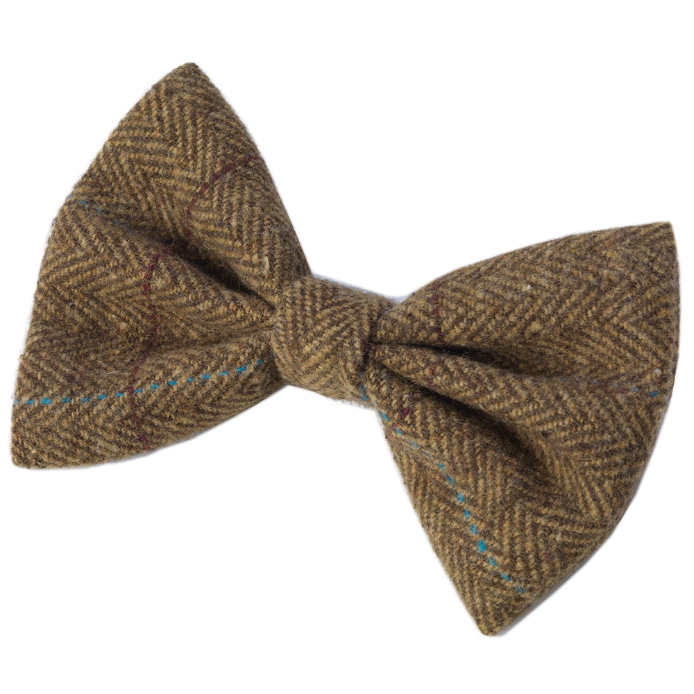 dog with bow tie photo - 1