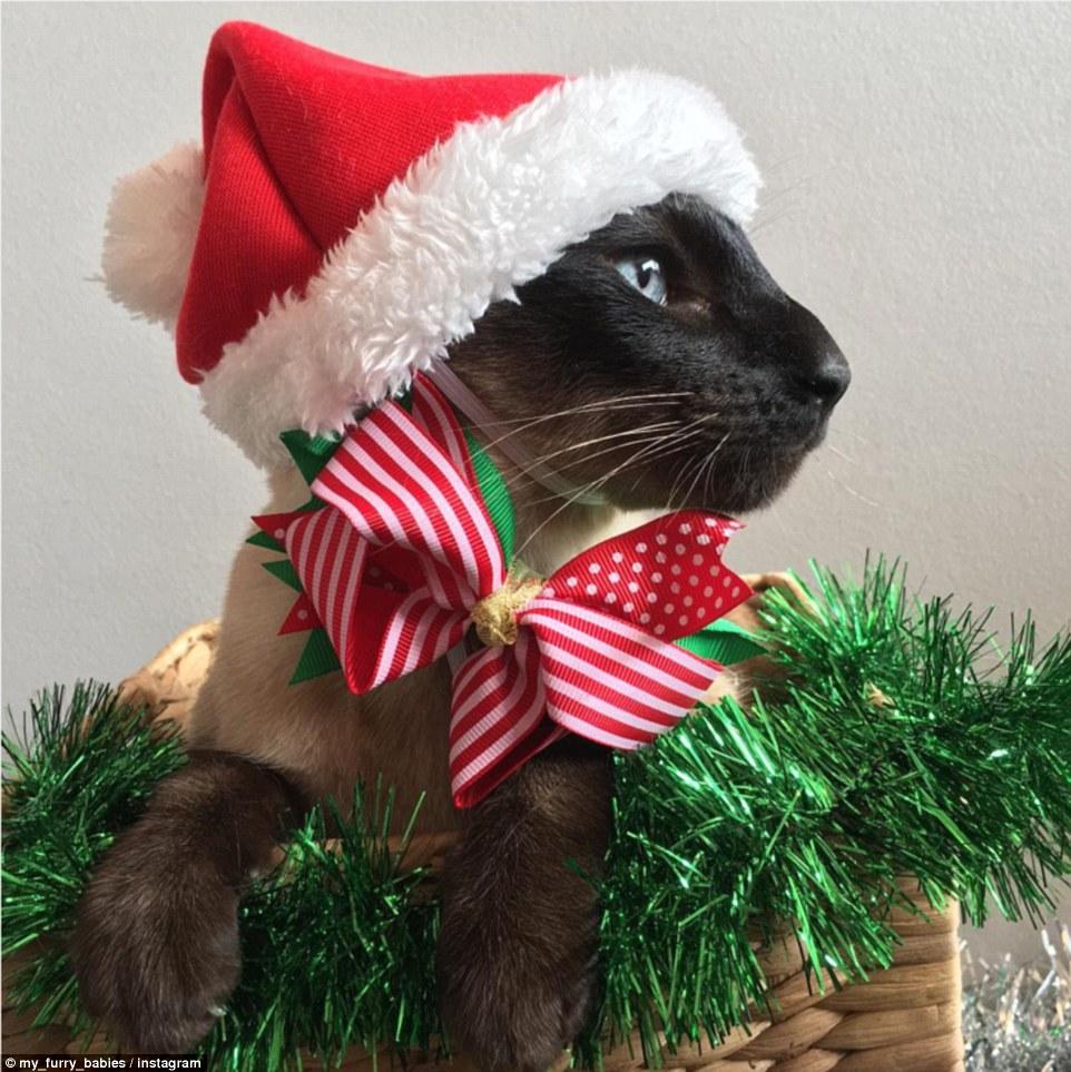 kitten bow tie photo - 1