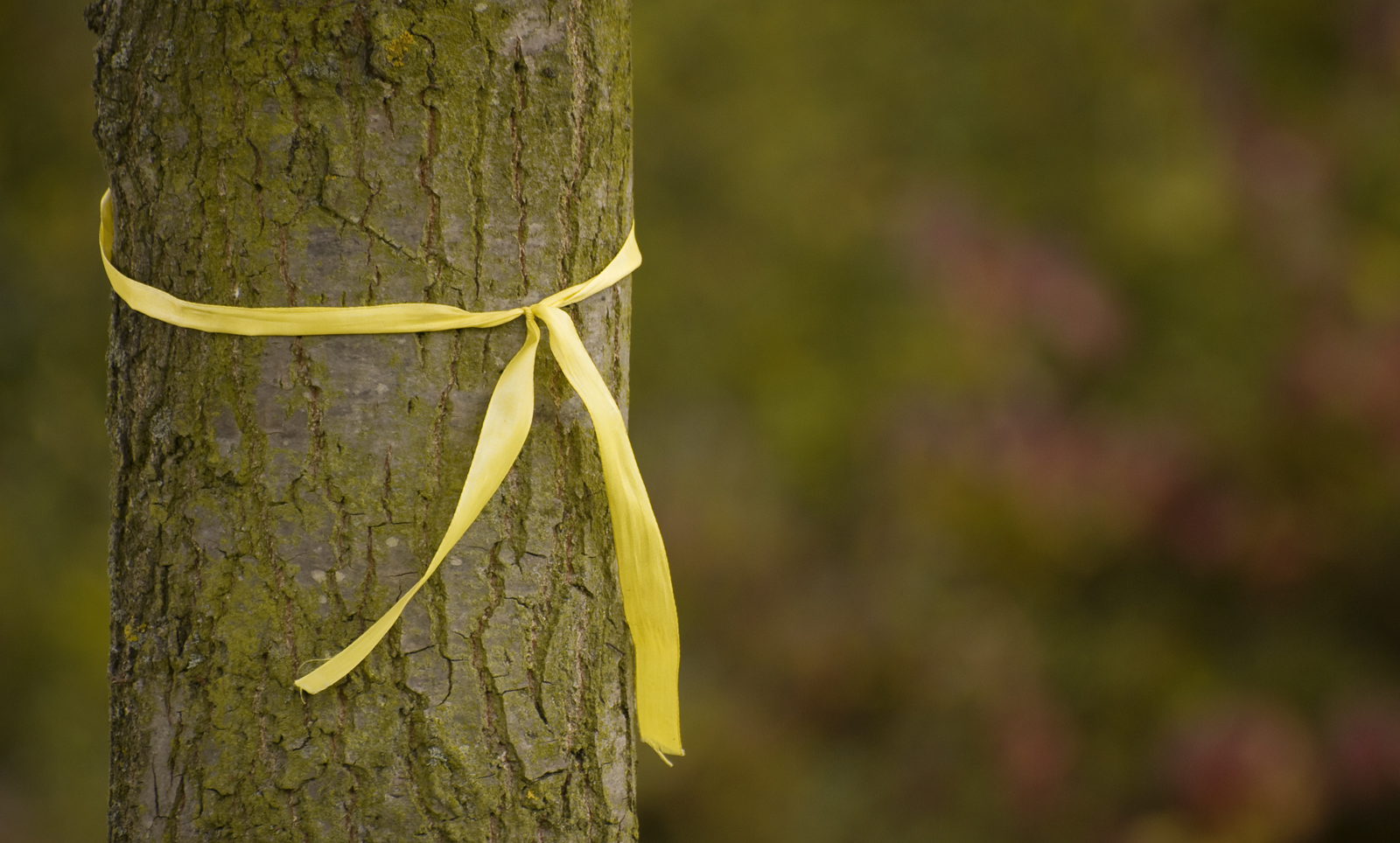 tie a yellow ribbon round the ole oak tree photo - 1