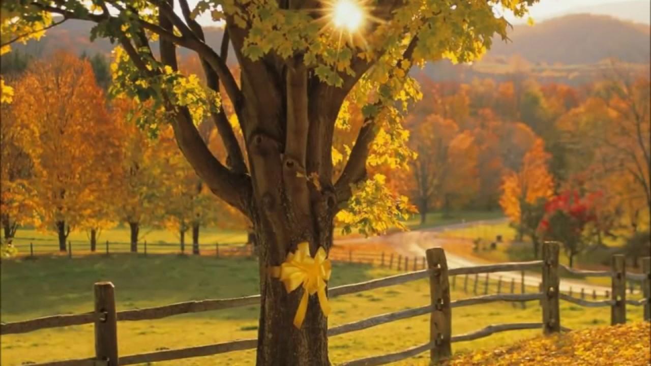 tie a yellow ribbon round the ole oak tree lyrics photo - 1