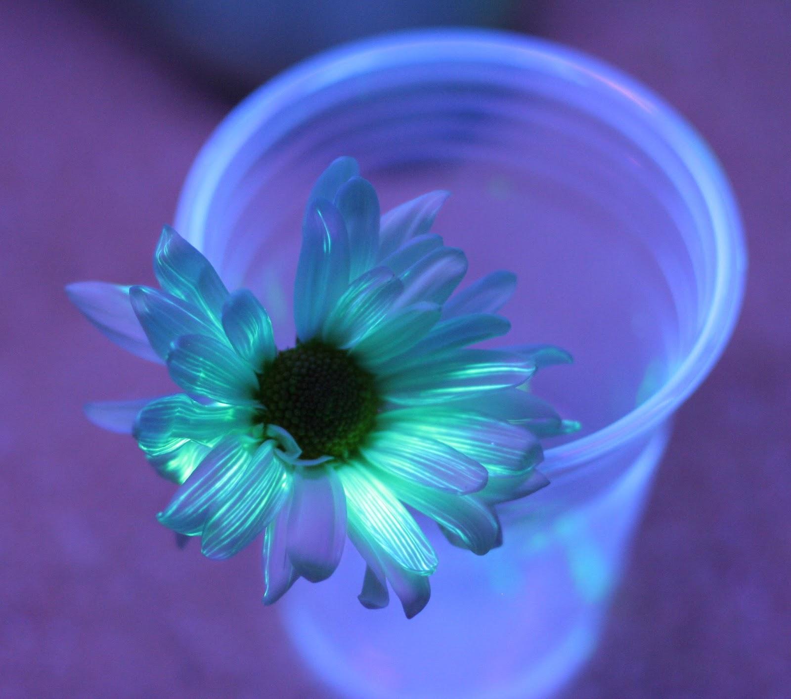 tie dye flowers photo - 1